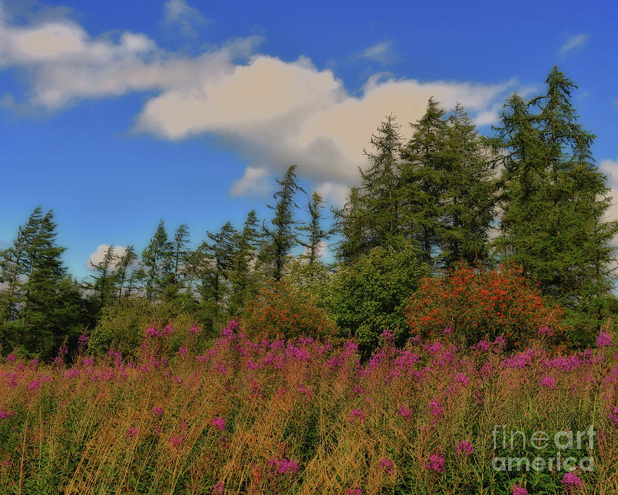 Scenic Camilty Forest, Scotland by Yvonne Johnstone