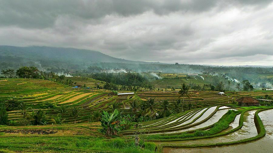 Scenic View Of Rice Paddy Field Against Cloudy Sky Photograph by Joseph Jeanmart / EyeEm