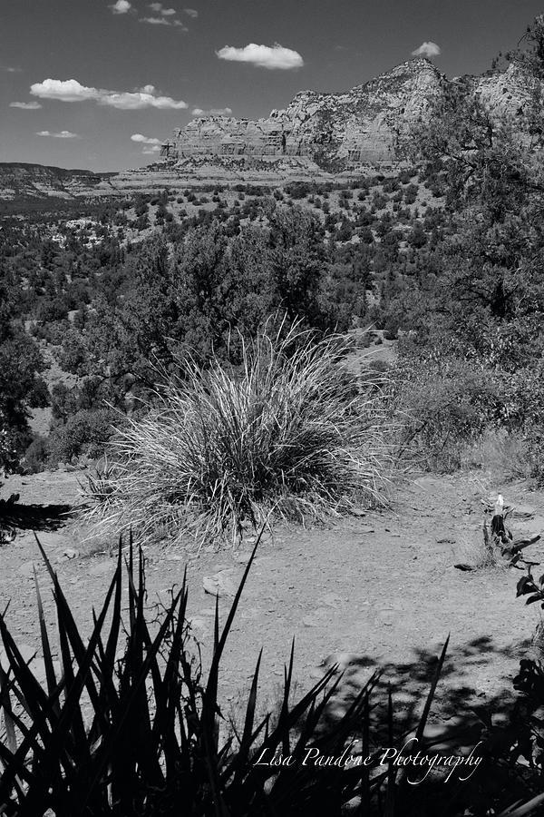 Schnebly Hill Sedona by Lisa Pandone