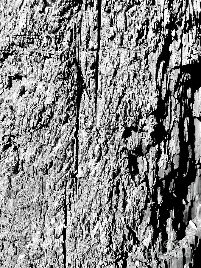 Scratched Wood Texture Photograph