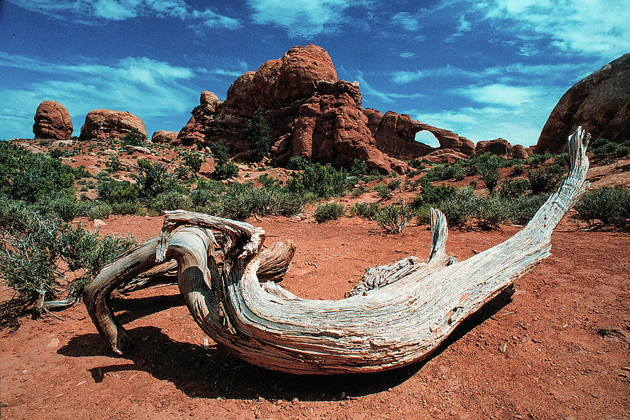 Sculpture In The Wilderness Photograph