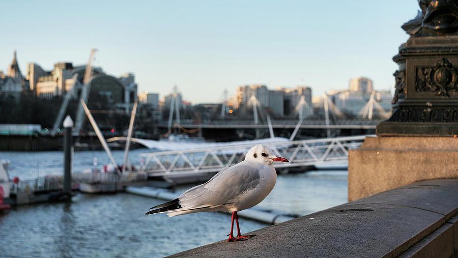 Sea gull watch the tourist at London Eye by Santosh Puthran