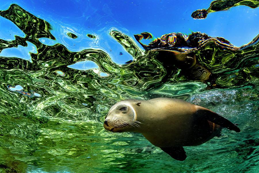 Sea Lion Photograph