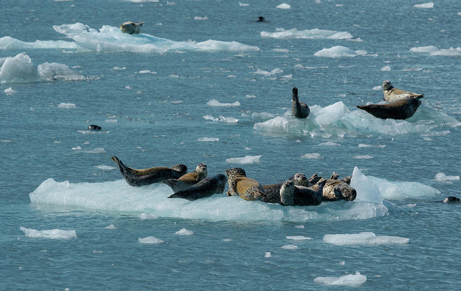 Sea lions resting by Asif Islam