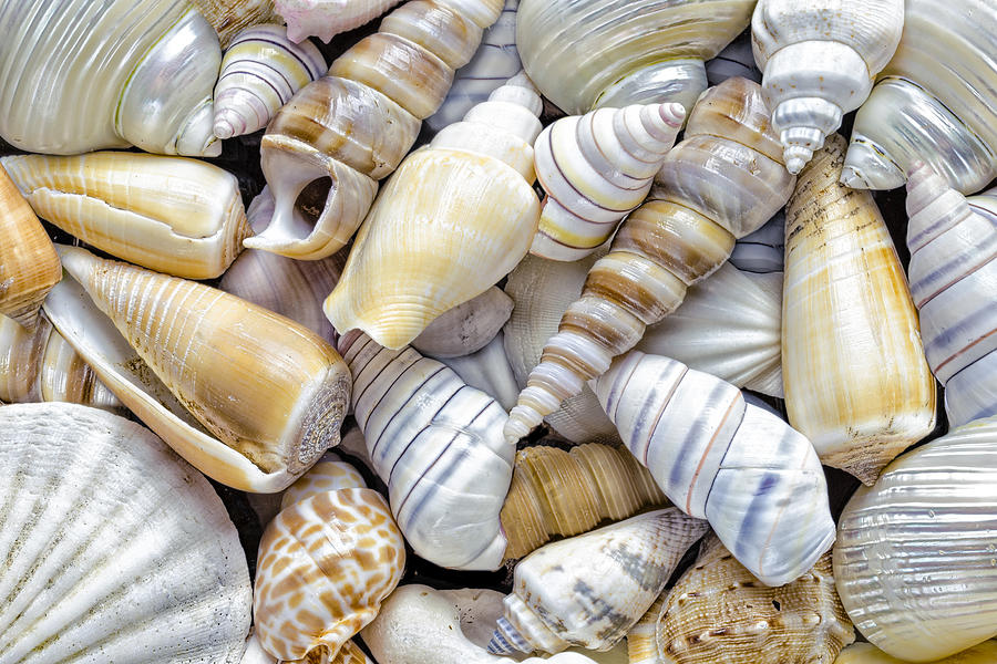 Sea shells Photograph by Mandy Disher Photography