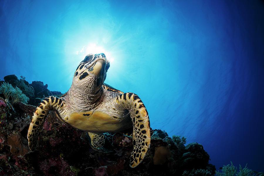 Sea Turtle Photograph