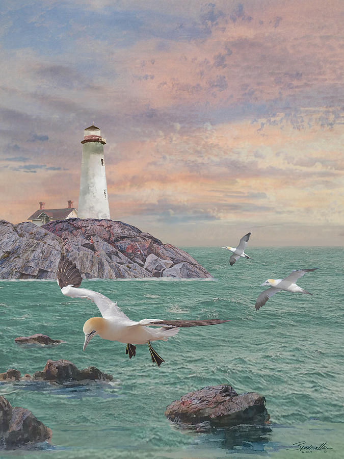 Seabirds at Rocky Point Lighthouse by Spadecaller