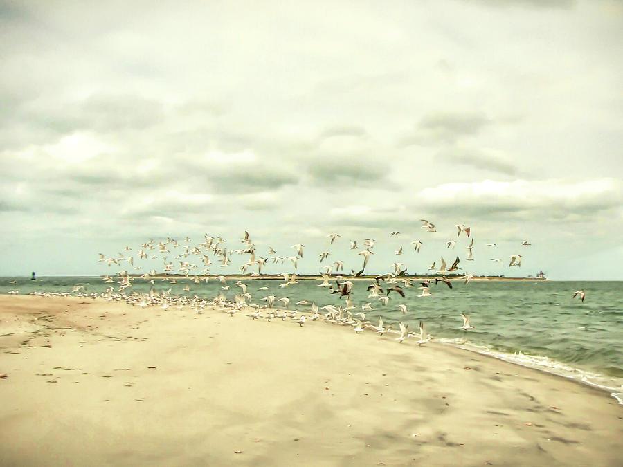 Birds Photograph - Seabirds On Shackleford Banks by Susan Hope Finley