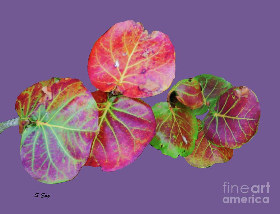 Seagrape Leaves On Purple 300 Painting