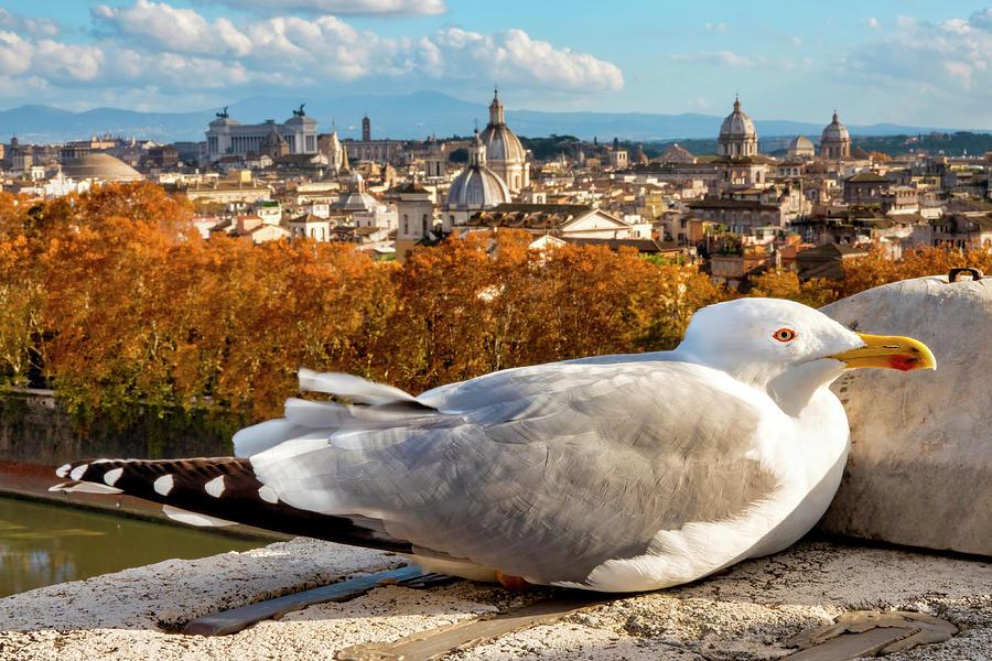 Seagull in Rome by Fabrizio Troiani