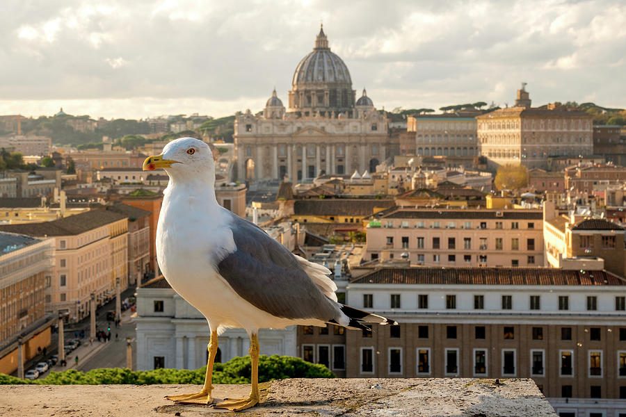 Seagull in Vatican City by Fabrizio Troiani