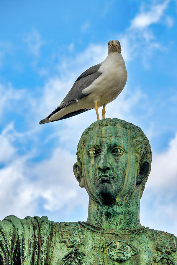 Seagull On Nerva by Fabrizio Troiani