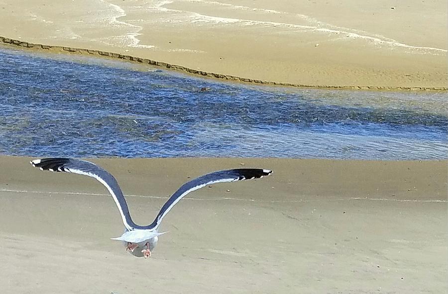 Seagull Solitude by Suzy Piatt
