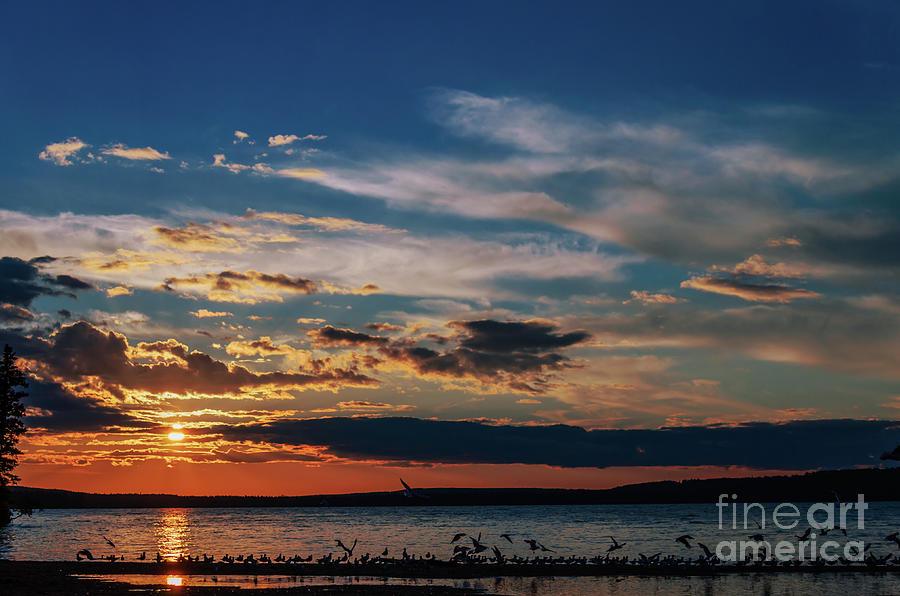 Seagulls On Waskesiu Lake Photograph
