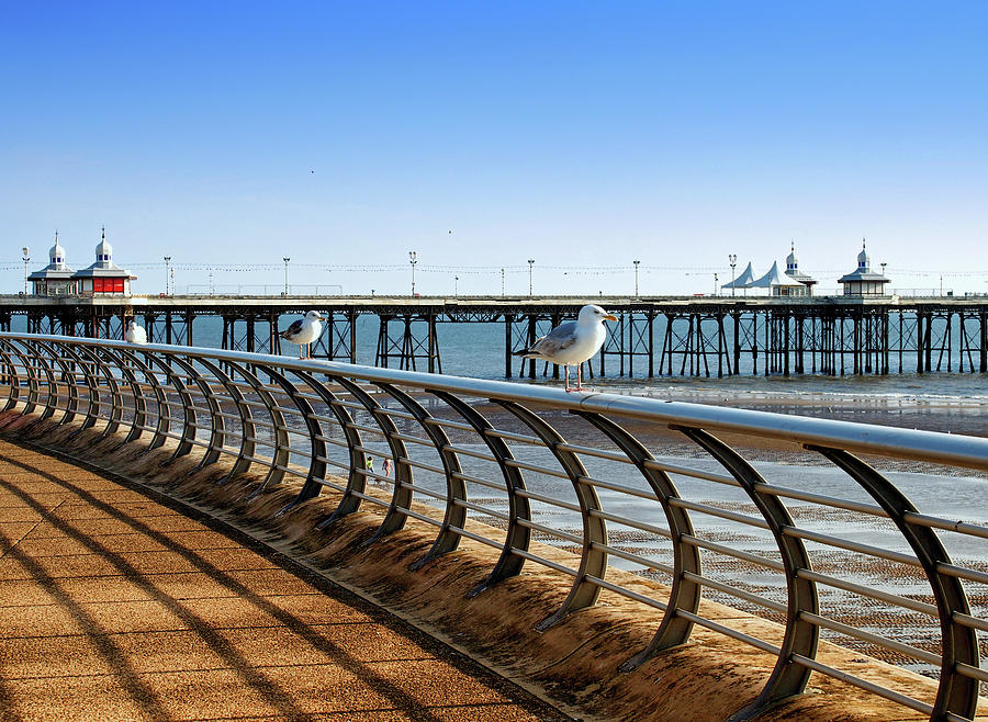 seagulls on the seafront by Philip Openshaw