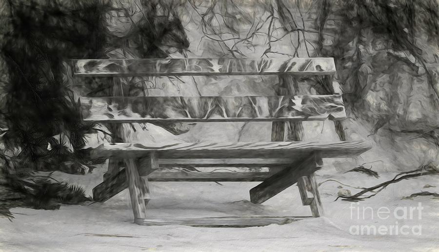 Seal Watching Bench by Karen Silvestri