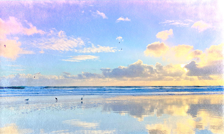 Seascape Birds On Beach Photograph