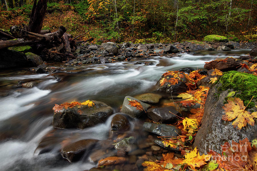 Seasons Around The Bend Photograph