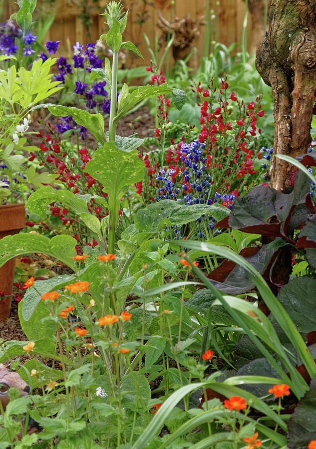 Secret Garden Photograph