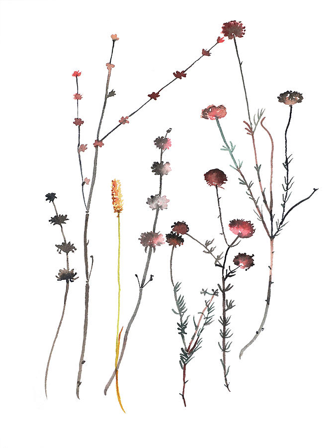 Seed Heads And Flowers Painting