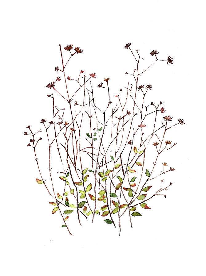 Seeds And Dried Flowers Painting