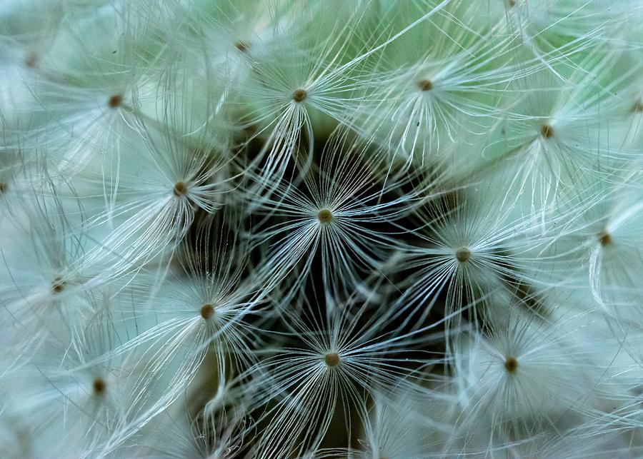 Seeds Photograph