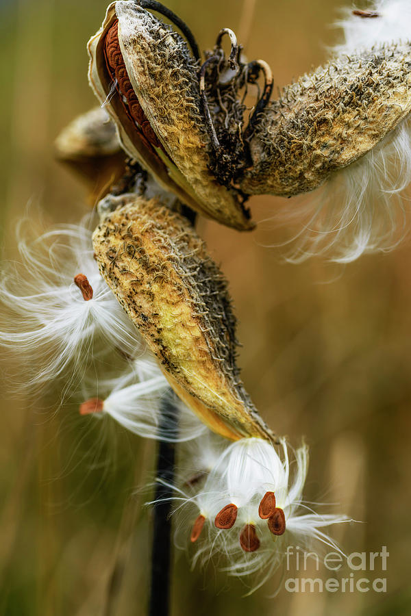 Seeds on the Wind by Thomas R Fletcher