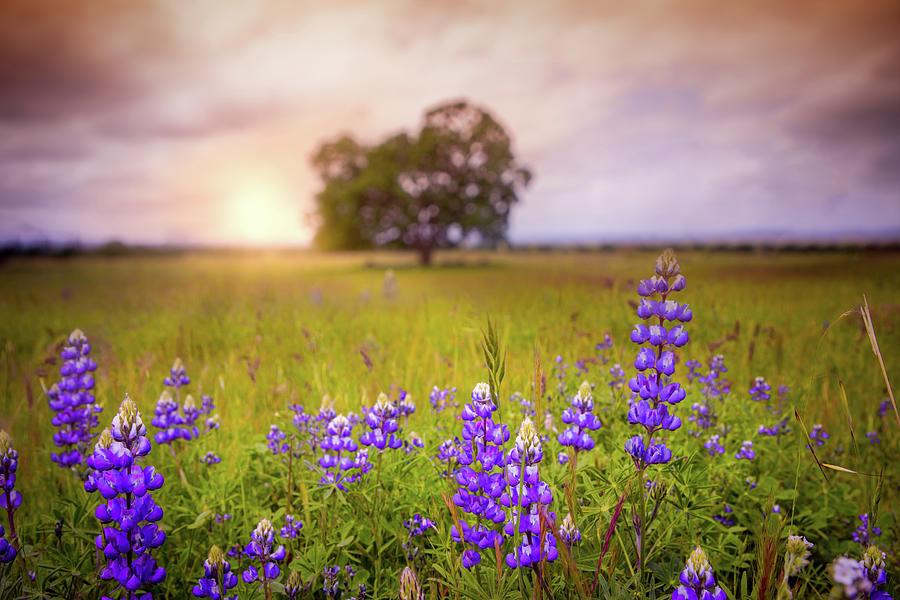 Seeking Spring Photograph