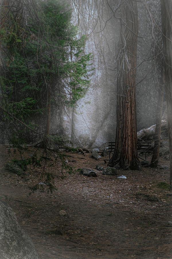 Bench Photograph - Seeking the Light  by Paul Malen