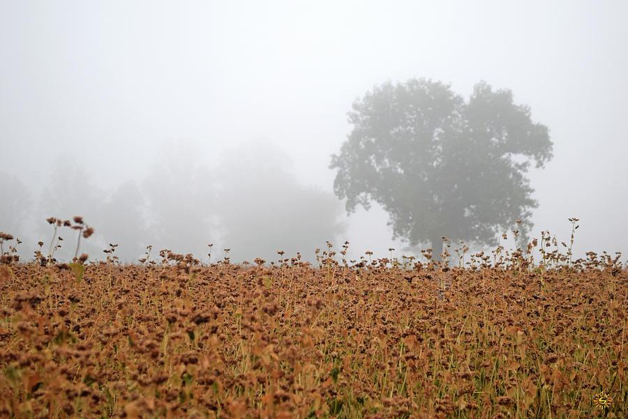 Senescent Mists Photograph by Staci Grimes