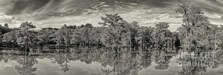 Sepia Panorama of Mill Pond and Bald Cypresses Swamp at Caddo Lake State Park - Karnack East Texas by Silvio Ligutti