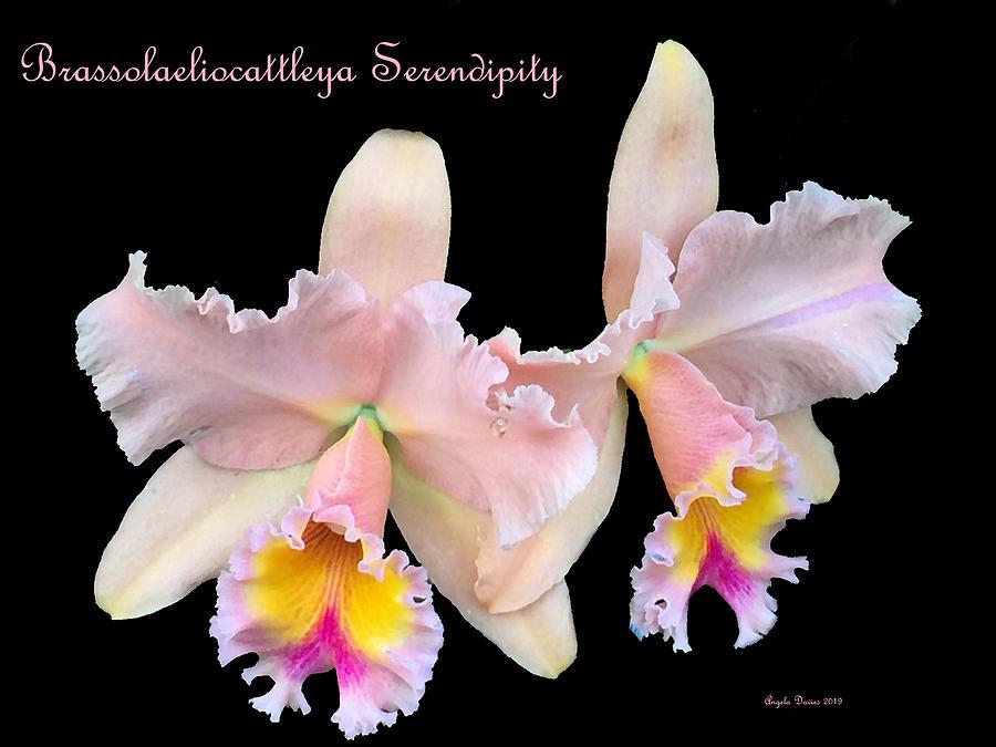 Serendipity by Angela Davies