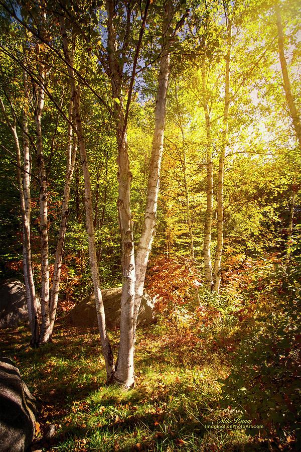 Serene Photograph - Serene Scene Vermont by Mike Braun
