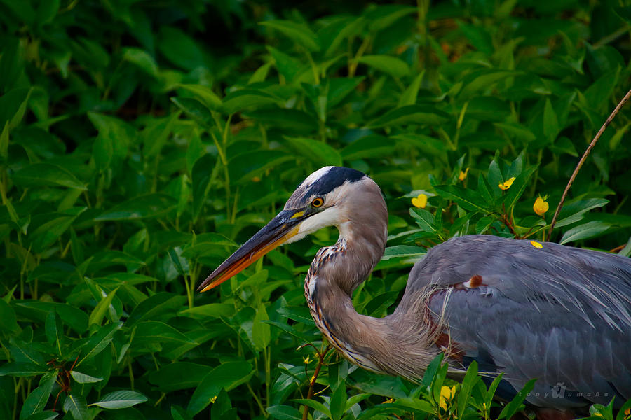 Serious Fishing Photograph by Tony Umana