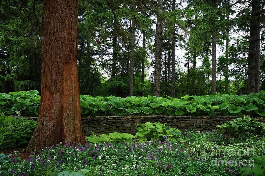 Shaded Garden Photograph