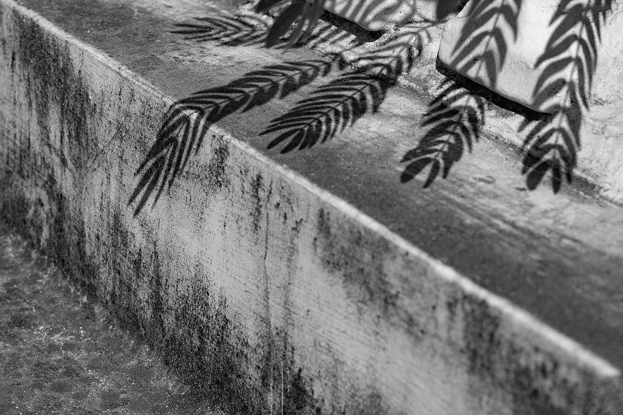 Outside Photograph - Shadow Leaves by Prakash Ghai