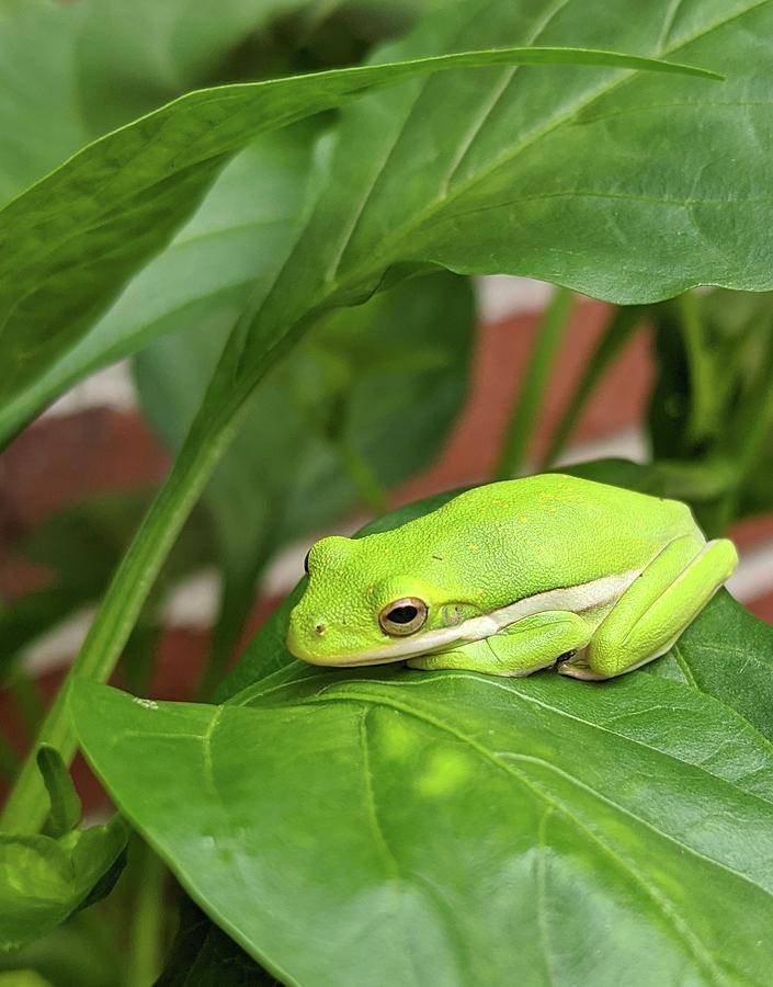 Shady Frog Photograph