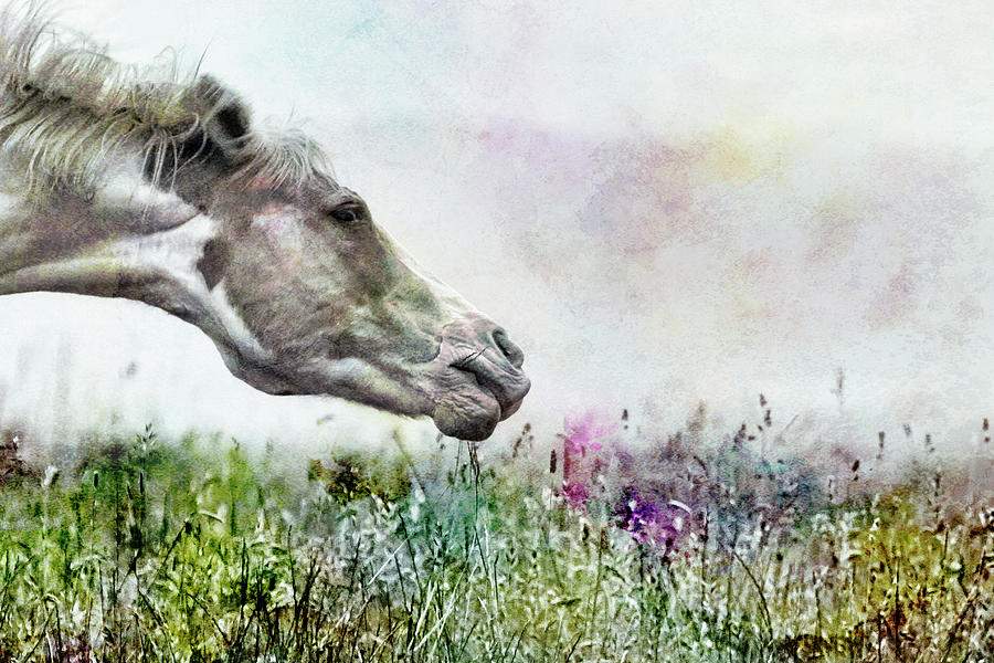 Shake It Off Special Textured Photograph