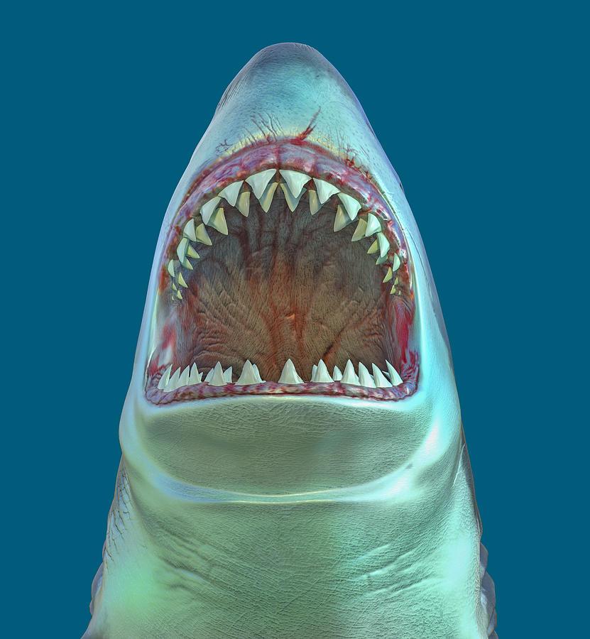 Shark Attack Png Digital Art