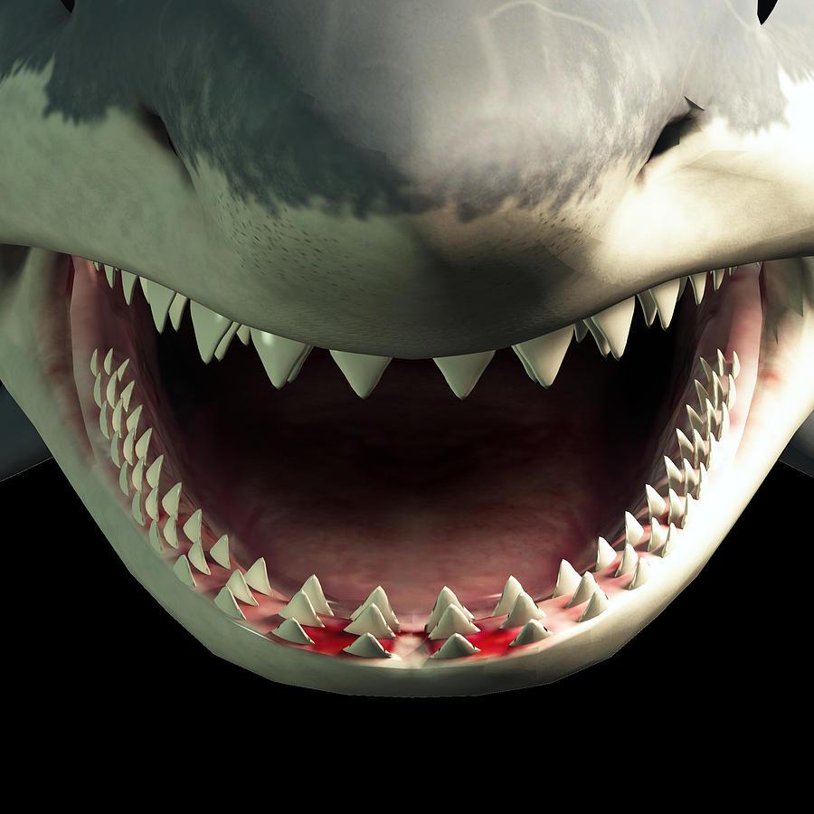 Shark Teeth Digital Art