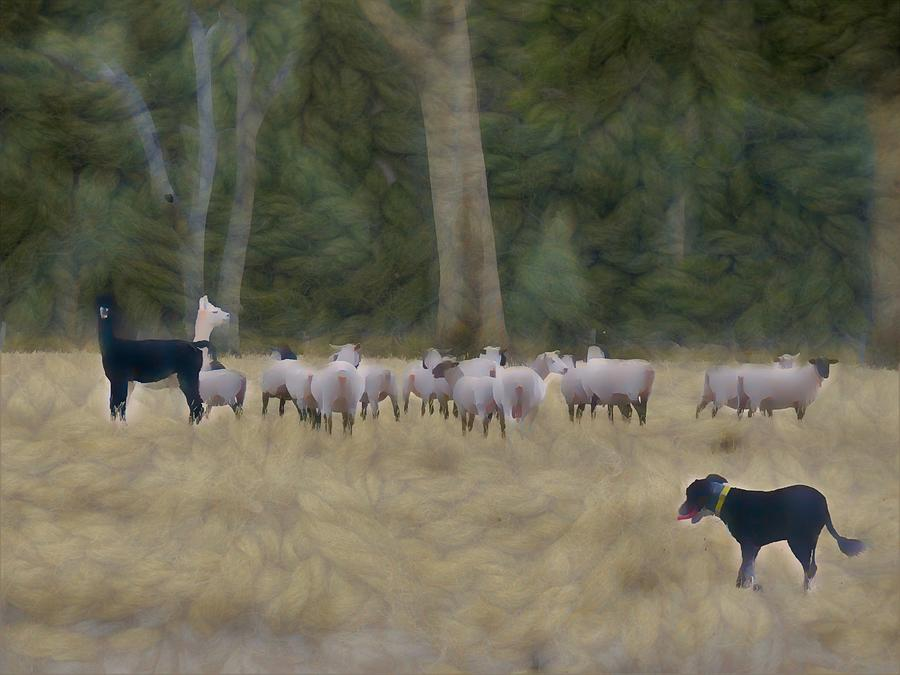 Farm Life Mixed Media - Sheepdog Herds While Alpacas Protect The Sheep by Joan Stratton