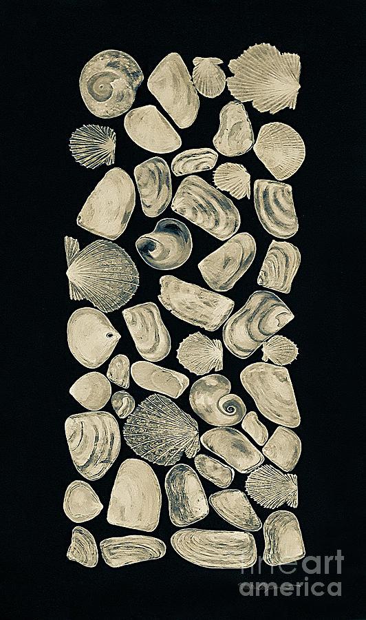Shells Digital Art