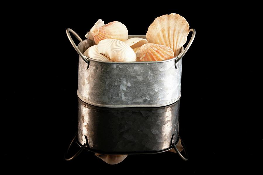 Shells In Tin Photograph