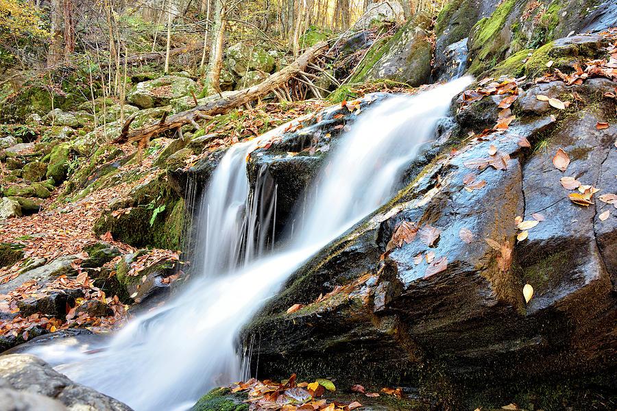 Dark Photograph - Shenandoah National Park - Dark Hollow Falls by Brendan Reals