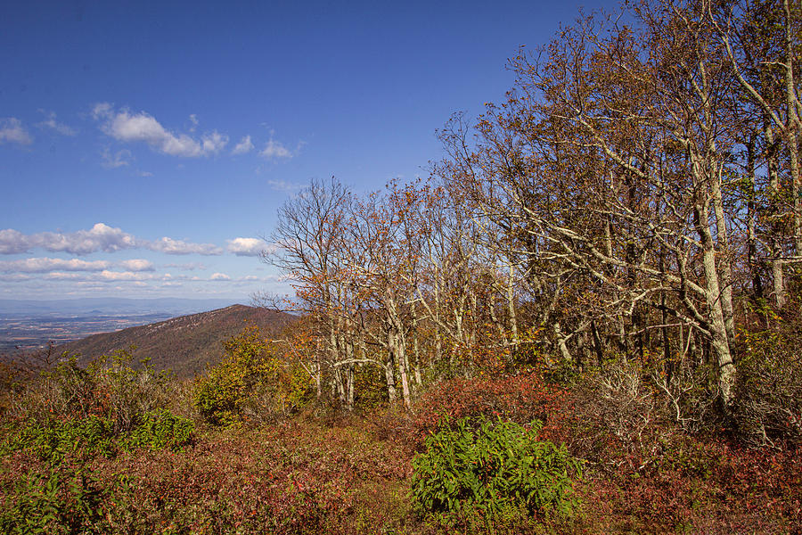 Shenandoah National Park by Pete Federico