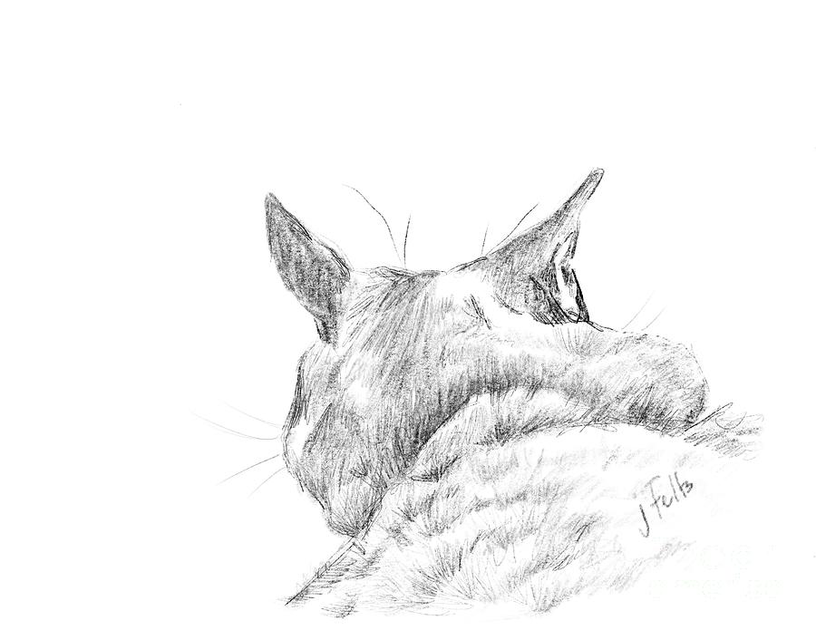 Cat Digital Art - Shes Ignoring Me by Janet Felts