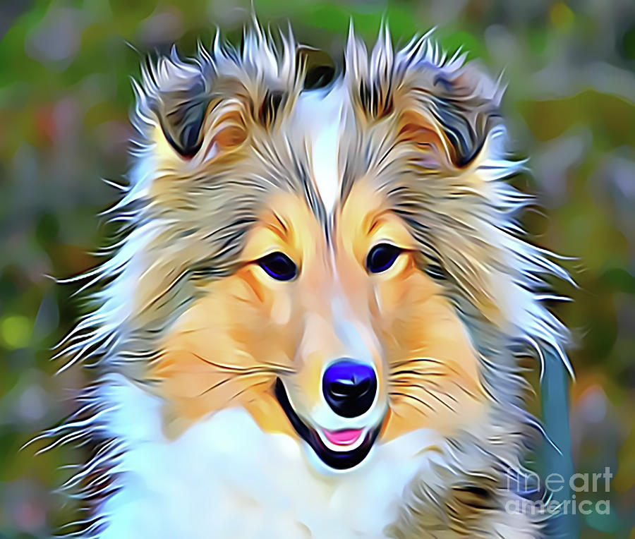 Sheltie Drawing - Shetland Collie by Sun Leil