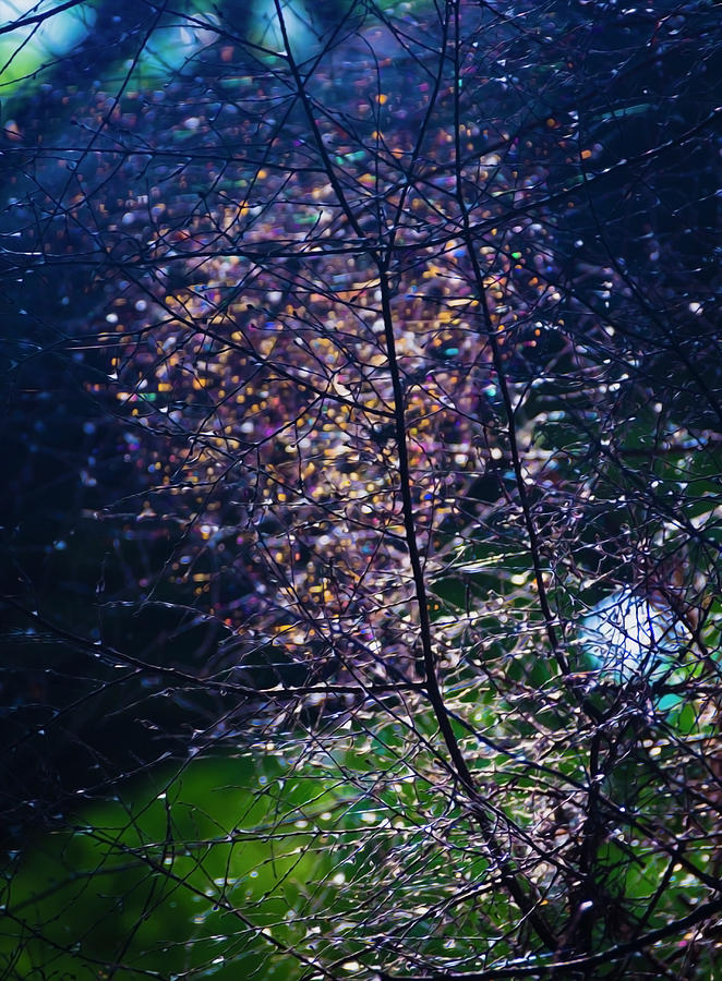 Shining Spider Web in Dark Forest by Yulia Kazansky