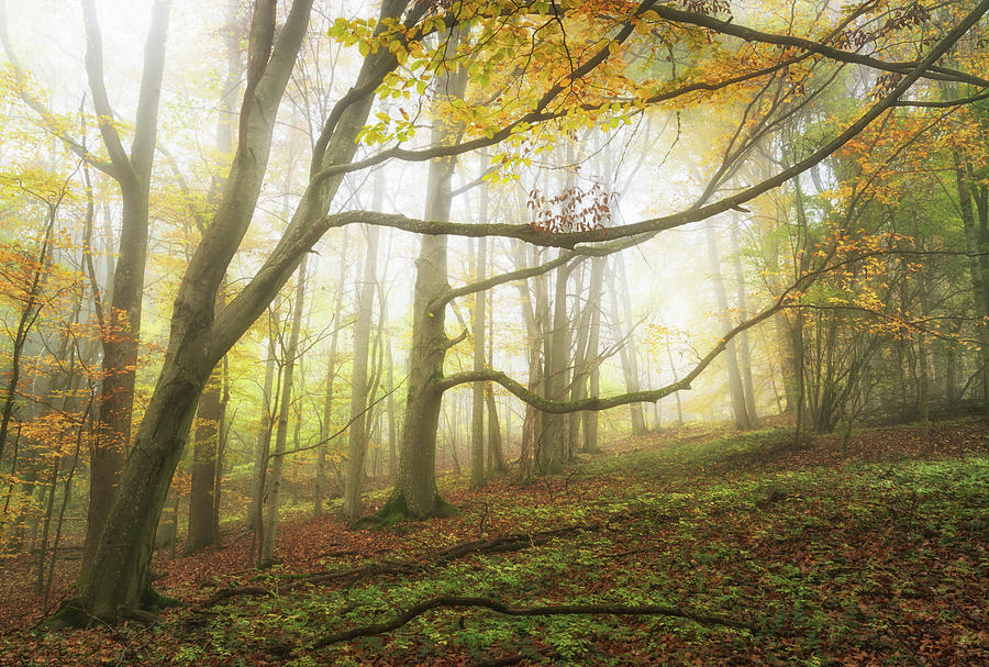 Fog Photograph - Shiny Fog in the Trees by Tobias Luxberg