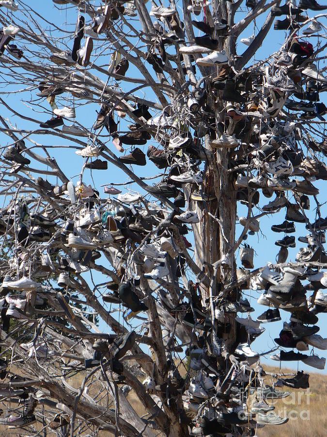 Shoe Tree Close Up by Carol Groenen